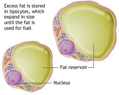 Zašto ne smemo da dozvolimo sebi višak kilograma?